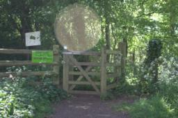 The Plantation is woodland nature reserve managed by Shropshire Wildlife Trust. Go through the kissing-gate and follow the path straight ahead.