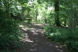 This section of the walk goes through a pleasant area of woodland with mature Chestnut, Beech and Lime trees.