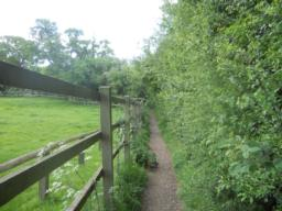 Follow the narrow path, with the hedgerow on your right.