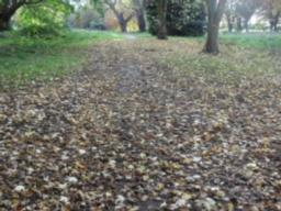 The ground and path disappears due to heavy leaf fall