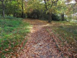 The path can become slippery due to leaf fall