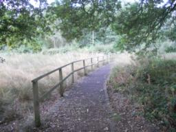 A longer section of boardwalk at the southern end of Brown Moss