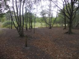 Just a short way from the car park through the woodland is a pleasant, open meadow.