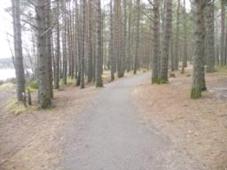 The path follows the banks of Loch Morlich for some distance.