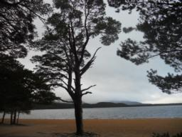 Glenmore holds one of the few remaining pockets of ancient Caledonian Pinewood in Scotland