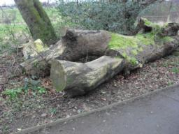 There has been a seat carved out of a fallen tree.  There is a lip of 35mm on the edging strip to get to the seat.