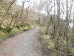 At this point, the path undulates and the quality of the path deteriorates, due to a build-up of leaf litter. With  assistance, people with mobility problemsmight consider  continuing along the circular trail (as opposed to doubling back and retracing steps along  the more accessible section).