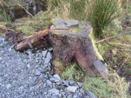 There are no formal seating areas along the route. However, tree stumps placed alongside the path are makeshift resting points.