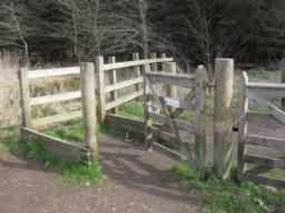 There is a kissing gate with a width of 100cm, there is slight overgrowth of greenery around the base of the gate