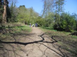 The path surface blends naturally into the woodland setting.