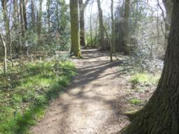 The path undulates through the woodland.