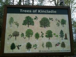 There's a pleasant mix of broadleaf and conifers at Kincladie. This board will help you identify different species.