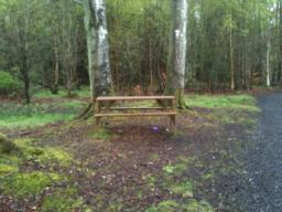Wooden bench, just left of the path.