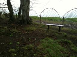 Another bench, 6m from the surfaced path over rough ground. There is an 11% cross gradient to reach it.