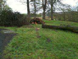 Felled trees offer resting points - these are 5m off the path over grassy surface.