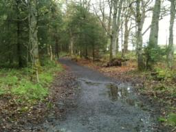 The path on this section varies in width but is not less than 100cm - though there are puddles.