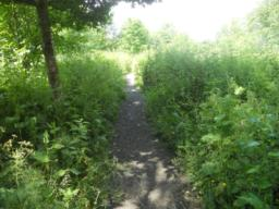 Dense herbaceous vegetation has encroached along the side of the path. Whilst pleasant, this also reduces the available width of the path to approximately 60cm throughout.