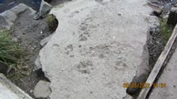 Look at paw prints in cement