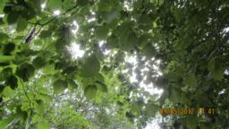 Overhead trees.  The leaves could make  the   path  slippy in autumn.