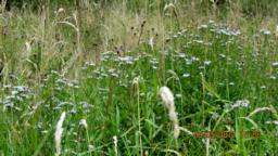Pretty meadow flowers.