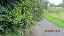 Beware of overhanging branches. Path slope  down and crossways here - 11.8 degrees over 13 metres