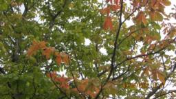 Many of the trees will change colours. One of our group has written a poem about autumn colours.