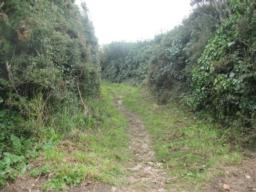 This is the start of one of the additional paths. It is quite a rough and uneven in places.