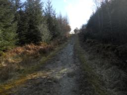 The condition of the path varies, becoming more uneven as you progress along the trail.