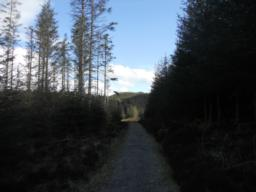 The path then levels off, bears right and continues on a straight course towards the forest road.