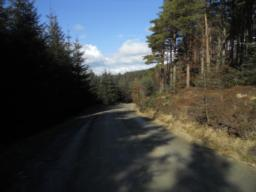The forest road follows a gradual descent towards the car park.