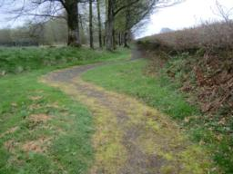 Proceed up the path for approx 20 metres to where the track turns sharply to the left.