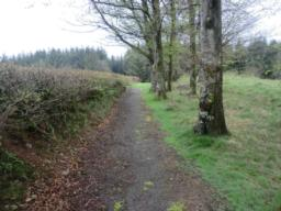 Having visited the Engine House site, retrace your steps along the 1-metre wide path (photo shows the trail running between the wall to the left and the trees to the right) until it intersects the 4-metre wide gravel road at point 11.