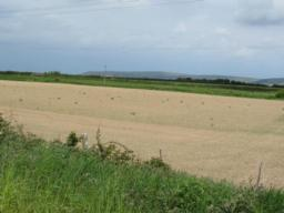 Fields in the Nature reserve. This field has been specially planted with bird seed plants.