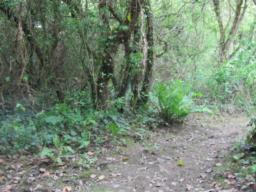 One of the side paths off the main track. very muddy with many tree roots and overgrown branches. Leads to bird hide.