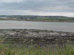 View of estuary and tidal mud. many flocks of birds visible in area.