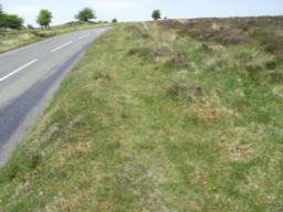 Grassy path, 500mm wide, on top of bank by the road