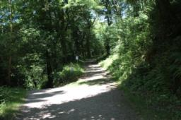 The trails enters woodland, continue uphill (5 degrees) at the junction
