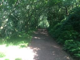 back into shaded woodland.