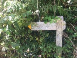 The more adventurous could take the field path to Mannacott Farm, just keep the hedge on your right, swinging left to join the farm track.