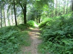 After approximately 50 metres the path opens out into about 1 metre wide with a solid surface of packed earth/gravel occasionally covered with pine needles as it wanders through the woods. There is a steady downwards gradient of 10% - 17% (1:10 > 1:6).