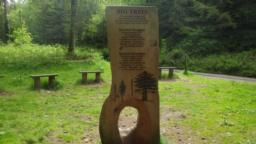 Although the direct route along the road gives good views of the tallest tree, it is possible (at photo 28) to join the Tall Trees trail by walking across the grassy seating area to a carved display describing many of the world's tall trees.