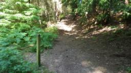 Here, the circuit turns left and the next 50m rises steeply (58%).  The surface is earth with exposed tree roots and can be slippery when wet.  This footpath is initially narrow (1.2m) but soon widens.