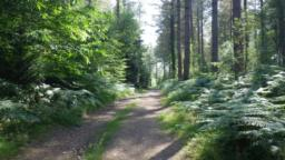 The path now climbs through mainly coniferous woodland.
