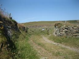 gate onto grassy area.