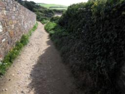 The path contracts in width before you reach Daymer Bay.