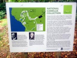 The National Camellia Collection started by David Trehane in 1975