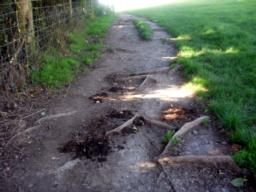 The surface is now grass worn in places near the gate to expose tree roots.