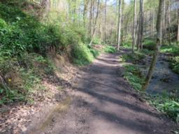 Path continues through the wood with views of the beck to the right. Path comprises of compacted/loose gravel and  compacted soil in places.