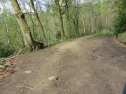 "Path comprises of compacted/loose gravel and compacted soil in places. Narrow uneven route available to bypass a soft muddy section"". Exposed stones and tree roots present too."