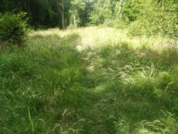 The path is narrow and overgrown. It may be uneven underfoot so take care along this section.